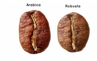 caffesima